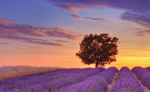 World   france tree at sunset in provence  france 073066 12?1579946176